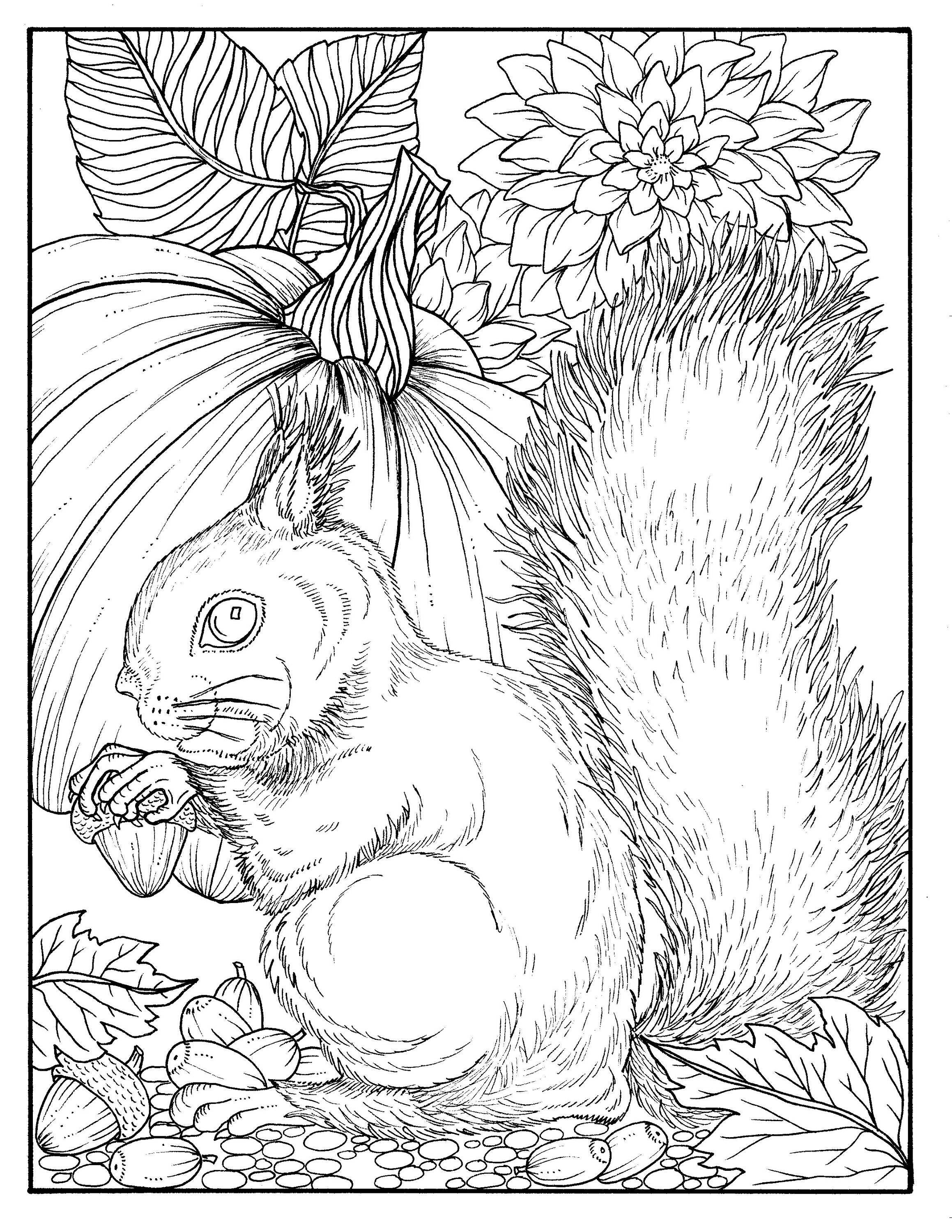 Fall Squirrel Digital Coloring Page Digi Stamp Thanksgiving | Etsy