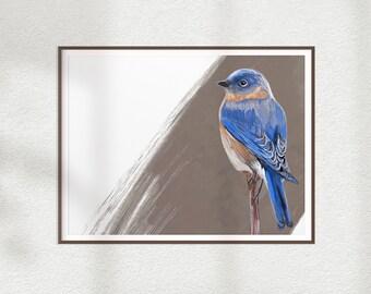 Eastern Bluebird Print, Bird Illustration, Digital Drawing, Animal Wildlife Art