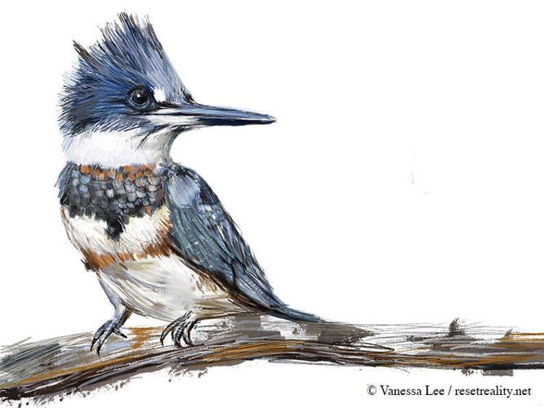 Belted Kingfisher Print Bird Illustration Digital Drawing Etsy