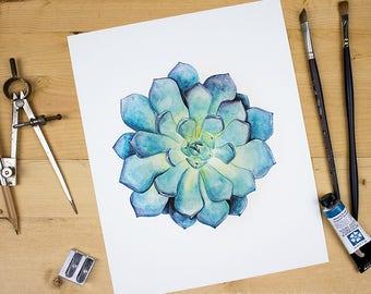 Succulent - botanical watercolor illustration of an echeveria succulent