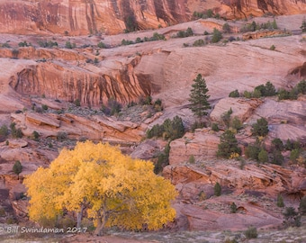 Canyon de Chelly – Cottonwood and Red Rock