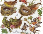 Paper Scrap Die Cut Relief, Birds Nest, Decoupage Craft Sheet, Scrapbook, EF, Germany