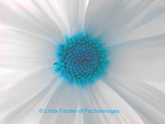 Macro white daisy flower with blue center wall art nature home etsy image 0 mightylinksfo