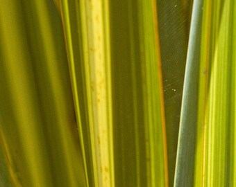 Leaf abstract - Fine Art Photography - Wall Décor - Nature Photography