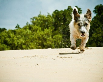 I am NOT Crumpet 1 - Dog Photography - Wall Décor - Terrier