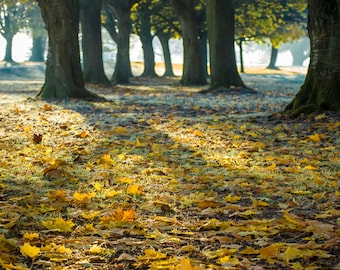 Autumn is here again - Fine Art Photography - Wall Décor - Nature Photography