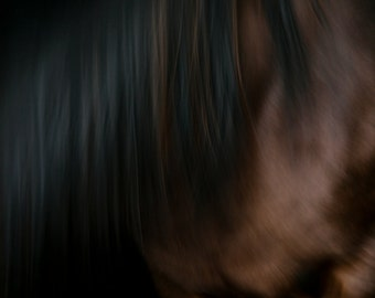 Horse Abstract 1 - Fine Art Photography - Wall Décor - Nature Photography