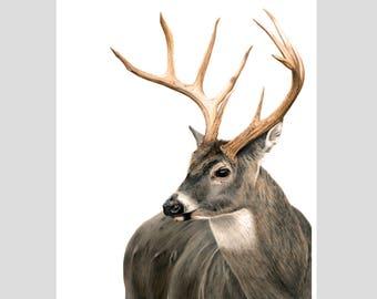 White-Tailed Buck Print