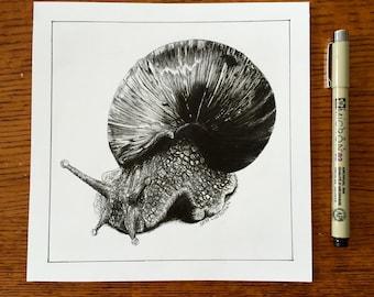 Orignal Snail Sketch