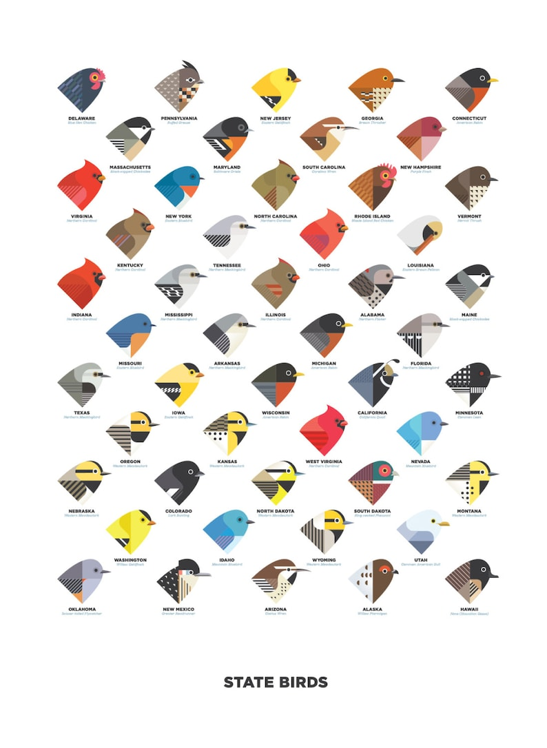 State Birds digital illustration / art print image 0