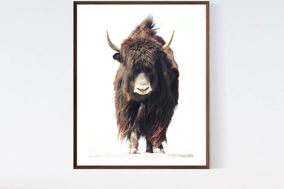 Highland Cow Art The Beast No 1 Fine Photo Decorating Etsy