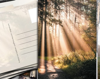 Enchanted Forest with Sun shadow light Postcards for Postcrossing - Fine Art Photograph