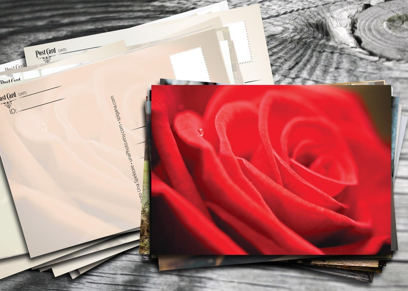Red rose postcard Fine Art Photograph postcard for Postcrossing lovers