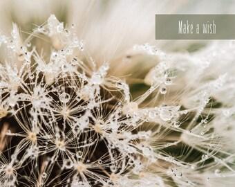 White Dandelion fluff - Fine Art Photograph. Make a wish quotes  postcard for Postcrossing
