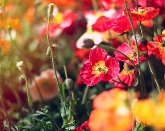 Red and yellow flowers fine art digital download