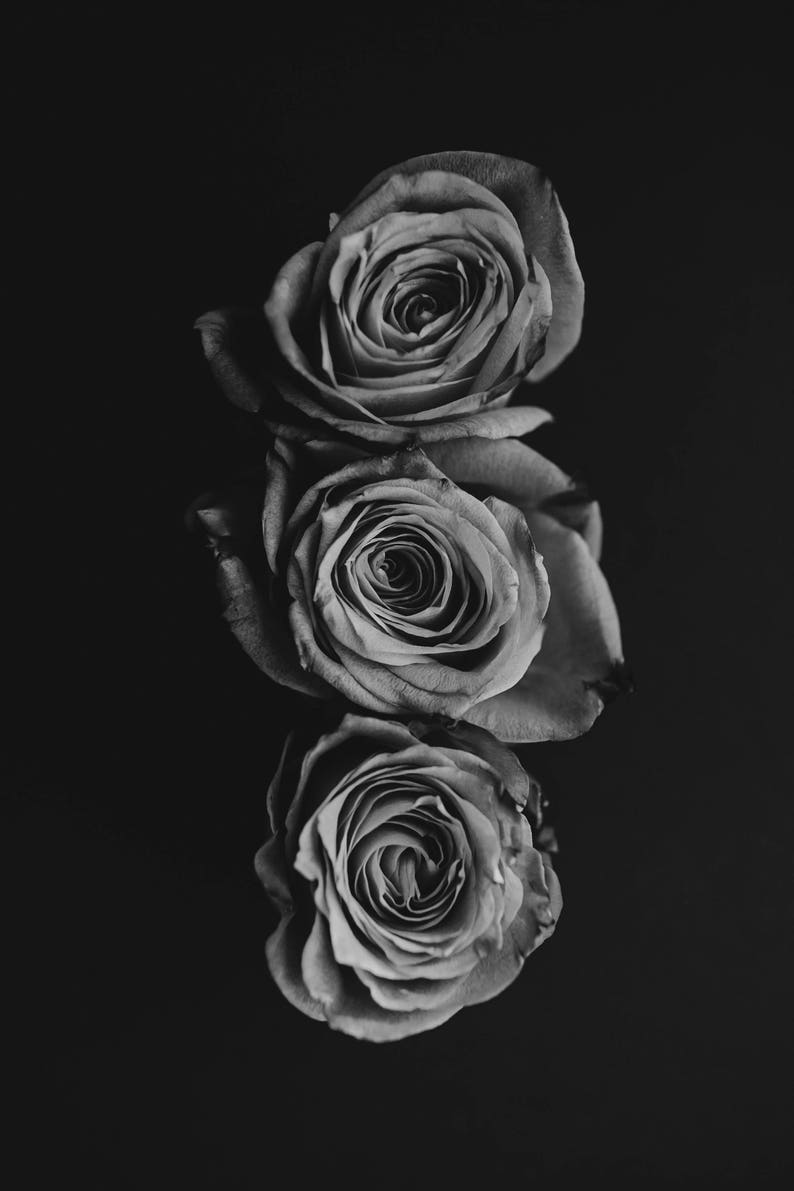 3 roses in black and white digital download fine art edit