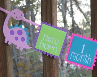 Pink Dinosaur First Year Photo Banner Girl 1st Birthday T Rex 12 month Picture Banner Dinomite Party Decoration Purple Teal Hot Pink & Green