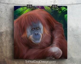 Orangutan Digital Download Printable