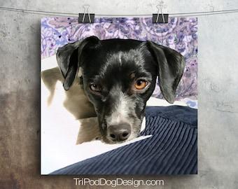 Rat Terrier - Digital Download Printable