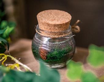 Gel Candle - Terrarium moss transparent Candle - Green Tea scent