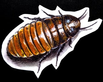 Madagascar Hissing Cockroach Vinyl Sticker