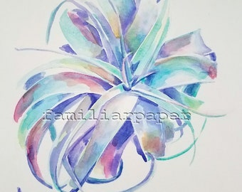 Air Plant (Tillandsia) - Archival Art Print of Original Watercolor Painting