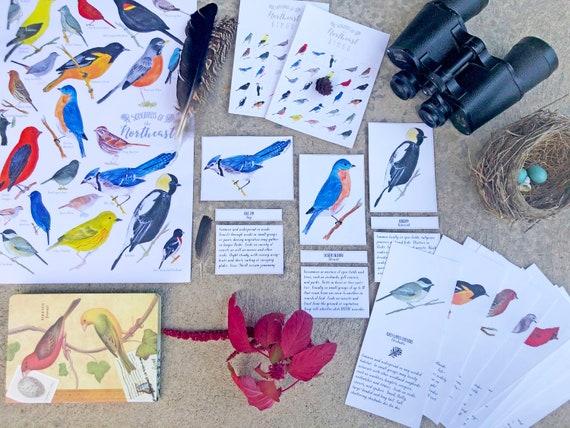 Bird Unit Bundle  Watercolor Homeschool Bird Study