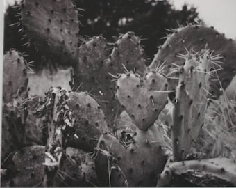 Cactus Print / Cactus Decor Art Photography Canvas / Black and White Nature Print / Ready to Hang