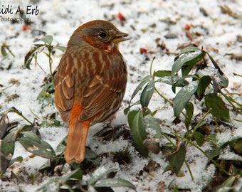 Bird photo card, photo note card, blank card, Bird note card, bird photography, Bird Stationary, greeting card, Bird greeting card, card