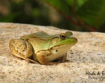 Frog photo card, photo note card, blank card, Wildlife photo card, Frog card, Frog photography, greeting card, Nature card, notecard