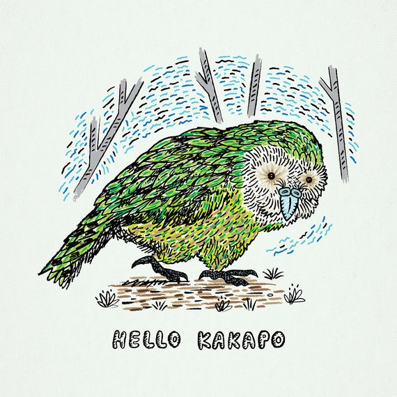 Hello Kakapo - Animal Art Poster Print by Oliver Lake - iOTA iLLUSTRATiON