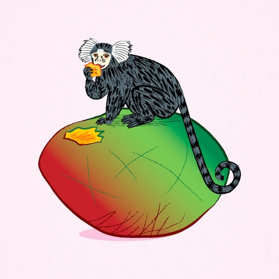 The Marmoset and the Mango - Animal Art Poster Print by Oliver Lake - iOTA iLLUSTRATiON