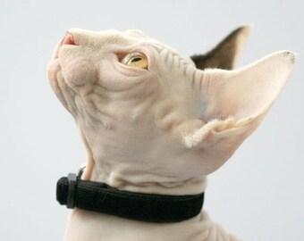 Soft Velvet Cat Collar - Jet Black - Kitten or Large Size B118D181