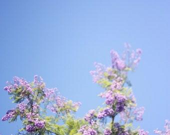 Jacaranda Tree I - 8x10 Fine Art Photograph