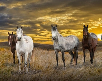 Western Horses on the Range, Mustang Horses grazing in a Pasture, Montana Big Sky, Western Fine Art, Landscape Photograph, Wall Decor