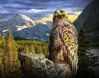 Golden Eagle in the Mountains, Wildlife Bird Photograph, Carnivorous Bird of Prey, Eagle Portrait, Predator, Chicken Hawk, Nature Photograph
