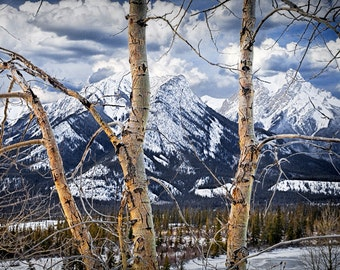 Rocky Mountain Range with Birch Trees in Winter by the east entrance to Jasper National Park Alberta Canada No.020 - A Panorama Photograph