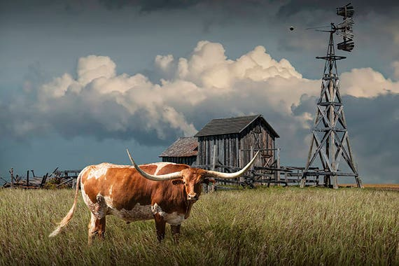 Longhorn Steer Cattle Pasture Wooden Barn Old Weathered Etsy