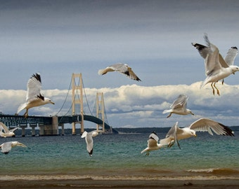 Flock of Gulls at the Bridge by the Straits of Mackinac between Lake Michigan and Lake Huron No.21272 A Bird Seascape Photograph