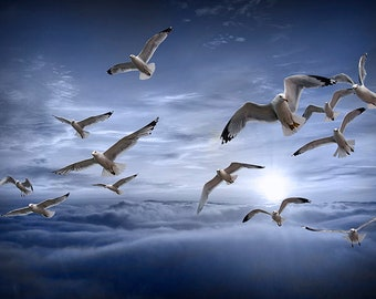 Gulls on the Wing, Flock of Flying Gulls by Lake Michigan, Great Lakes Photography, Blue Cloudy Sky, Seagulls in Flight, Freedom Soaring