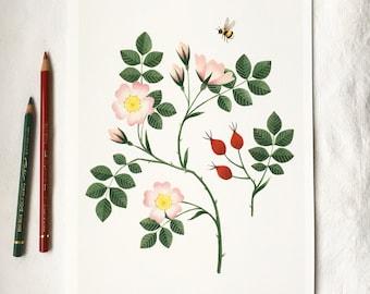 Dog Rose Giclée Art Print | A4 Signed Print of Original Painting | Botanical Illustration - Rosa Canina