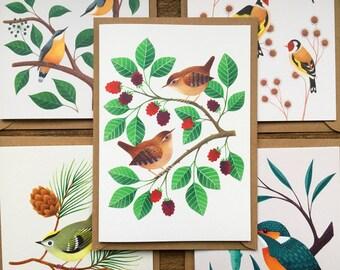 Set of 5 Bird Greetings Cards | British Garden Birds | Wildlife Illustration | Nuthatches, Goldcrest, Kingfisher, Goldfinches, Wrens