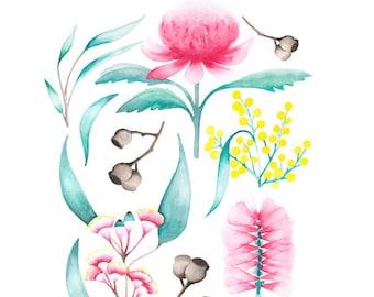 Australian Flora Watercolour Art Print with Gum Leaves, Wattle, Warratah, Bottlebrush
