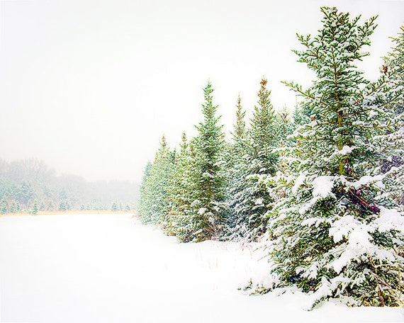Fine art photography print, snow scene, evergreens, winter, pines, landscape print