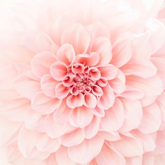 Blush Dahlia, Dahlia Flower Photo, Soft Peach Floral, Flower Print, Botanical Art, Dahlia Petals, Close Up Flower Photography, Home Decor