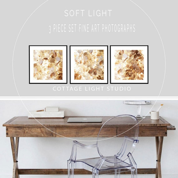Art, Photography, 3 piece set, Hydrangeas, Soft Light, Wall Art, Photography by Cindy Taylor