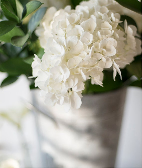 White Hydrangea Print, Floral Wall Art, Botanical Photo, Large Wall Poster, Fresh Flowers Art, Art For Her, Cottage Home Decor, Still Life