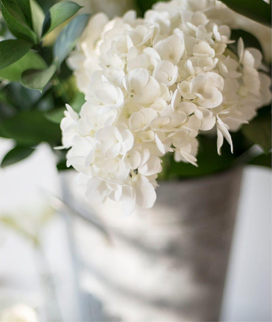 White Hydrangea Print Floral Wall Art Botanical Photo Large Etsy