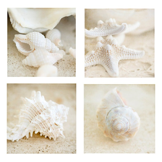 Shells Print, Beach Art, Shells Photo, Set of 4, Modern Beach Home Decor, Coastal Art Prints
