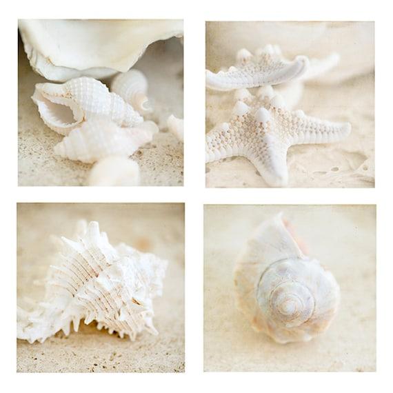 Shells Print, Beach Art, Shells Photo, Set of 4, Modern Beach Home Decor, Coastal Art Prints